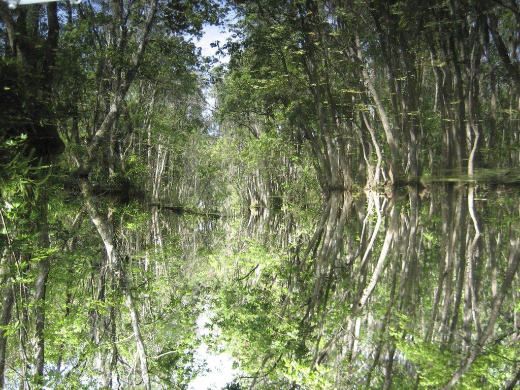 Dora Canal - Tavares, FL
