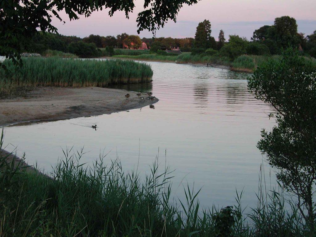 Macum Creek Geese, Kent Island, MD